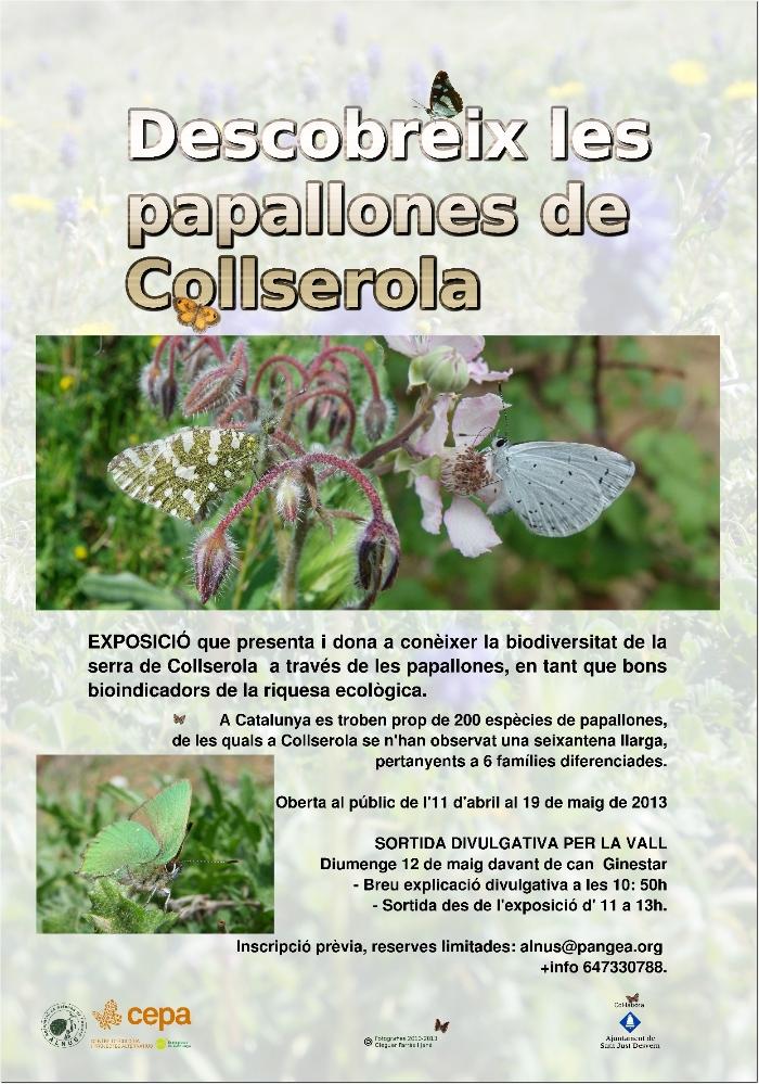 Cartellexpo papallones de Collserola